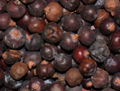 Juniper berries-1.jpg